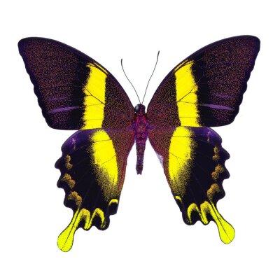 Fototapeta fantazyjne Motyl samodzielnie na białym tle