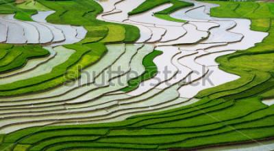 Fototapeta Farmers in terraced rice field in water season in Mu Cang Chai, Vietnam.