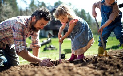 Fototapeta Father with small children working outdoors in garden, sustainable lifestyle concept.