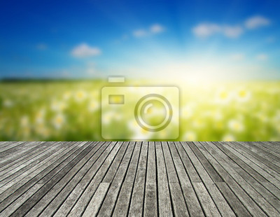 Field of daisies on and wood