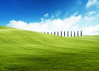 Fototapeta field of grass and perfect blue sky