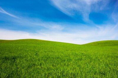 Fototapeta field of green grass and blue sky
