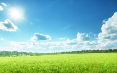field of spring grass and perfect sky