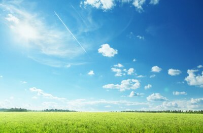 Fototapeta field of spring grass and perfect sky