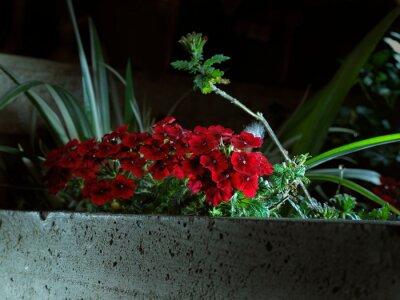 Fototapeta Fiori rossi tra il verde