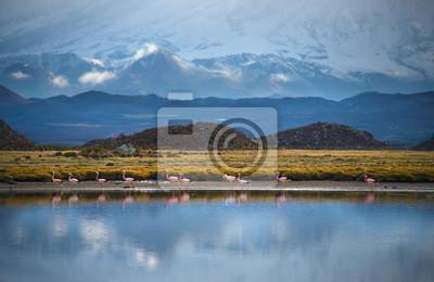 Flamingo, Jezioro, Chile