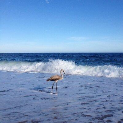 Fototapeta Flamingo na plaży