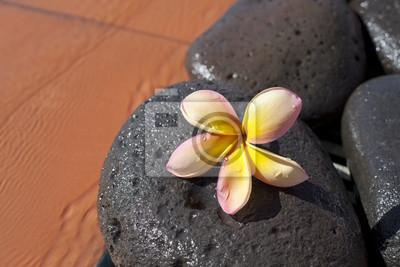 Fleur de Monoi