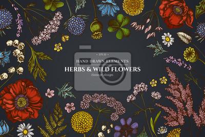 Fototapeta Floral design on dark background with shepherd's purse, heather, fern, wild garlic, clover, globethistle, gentiana, astilbe, craspedia, lagurus, black caraway, chamomile, dandelion, poppy flower, lily