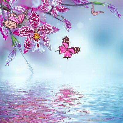 Fototapeta Floral tle z tropikalnych storczyków, Motyl