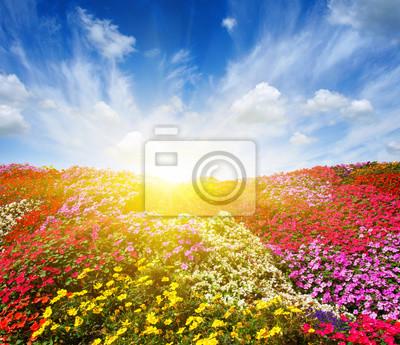 flower field with sunlight
