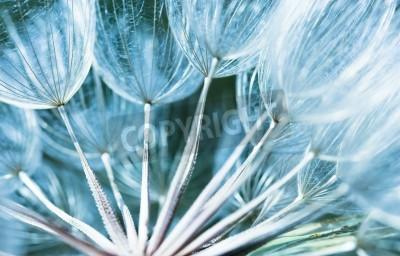 Fototapeta flower macro