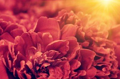 flower petals on the sun