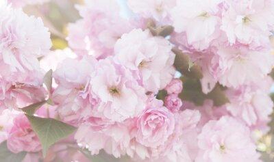Fototapeta Flower spring bouquet with leaf.  Soft focus. Nature blur background. Pink color.