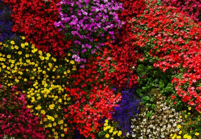 flowers background bright and colorful