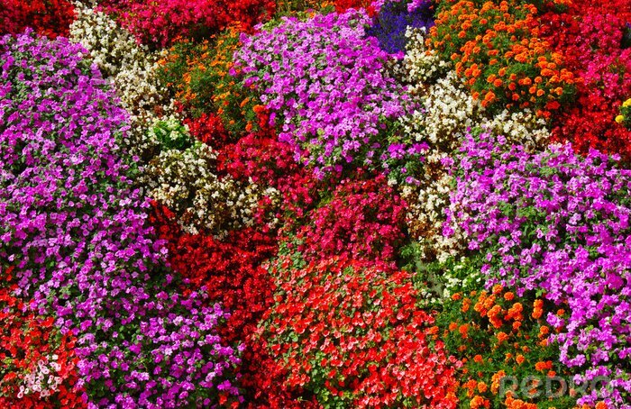 Fototapeta flowers background bright and colorful