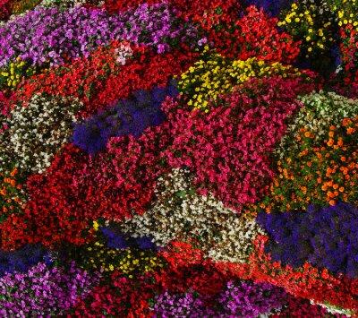 flowers background on full screen