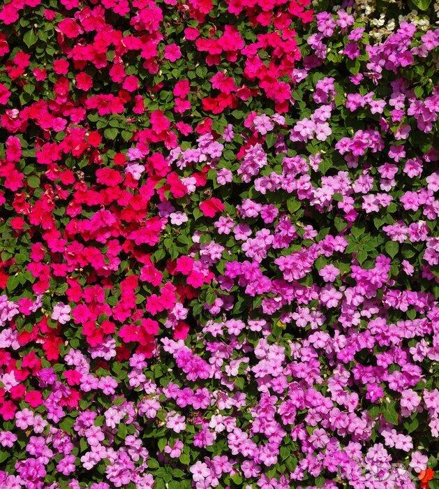Fototapeta  flowers background on full screen