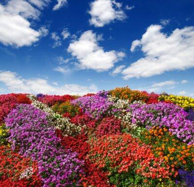 flowers growing on the field