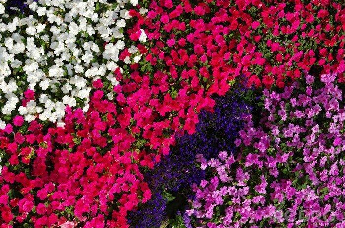 Fototapeta Flowers texture background