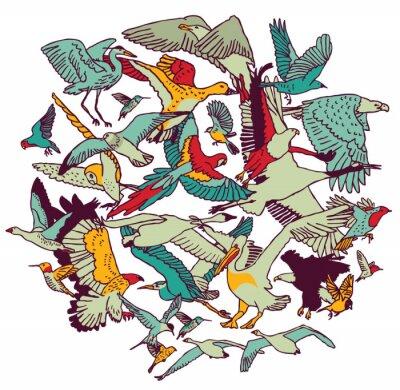 Fototapeta Fly ptaków okrągłe kolory izolować na białym