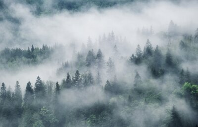 Fototapeta Foggy forest in the mountains. Landscape with trees and mist. Landscape after rain. A view for the background. Nature - image