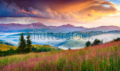Fototapeta Foggy summer sunrise in the Carpathian mountains. Colorful morning scene in the mountain valley. Beauty of nature concept background. Artistic style post processed photo.