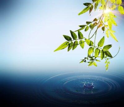 Fototapeta Fogliame e gocce che cadono w acqua con Raggi di Sole