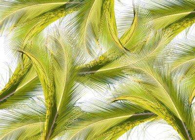Fototapeta Fond de palmes
