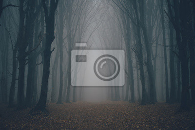 Fototapeta Forest in fog with mist. Fairy spooky looking woods in a misty day. Cold foggy morning in horror forest with trees