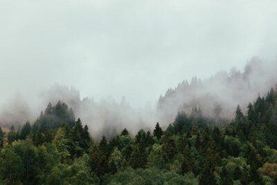 Fototapeta Forest with dense fog in the morning.