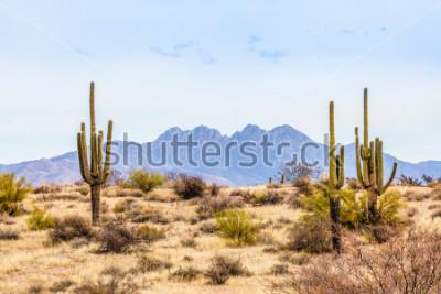 Fototapeta Four Peaks, wybitny punkt widokowy Gór Mazatzal na wschodniej linii horyzontu Phoenix w Arizonie, otoczony jest wysokimi kaktusami saguaro na pustyni.