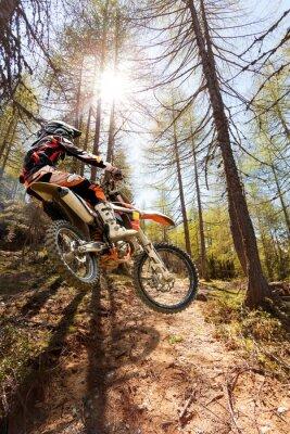 Fototapeta FRA gli Alberi motocross