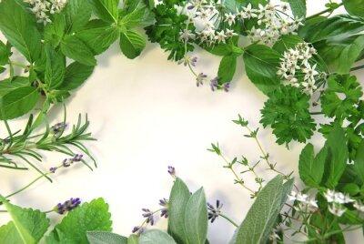 Fototapeta frame of herbs