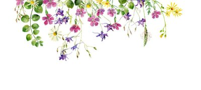 Fototapeta Frame of wild flowers and herbs on a white background. For greetings and invitations