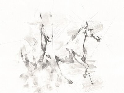 Fototapeta freehand horse head pencil drawing