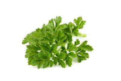 Fototapeta Fresh branch of parsley close up on white background.