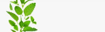 Fototapeta Fresh flying green mint leaves, lemon balm, melissa, peppermint isolated on light gray background flat lay. Mint leaf texture, pattern. Spearmint herbs. Tea ingredient. Ecology organic natural layout