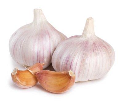 Fototapeta fresh garlic isolated on white background
