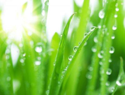 Fototapeta Fresh Green Grass