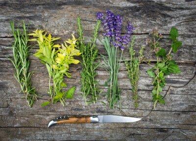 Fototapeta Frisch geerntete Kräuter der Provence
