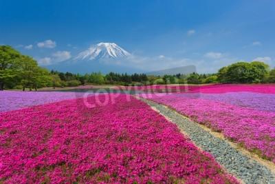 Fototapeta Fuji z Pink Moss lub Shibazakura