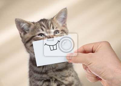 Fototapeta funny cat with smile on cardboard