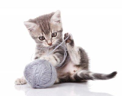 Fototapeta funny gray kitten