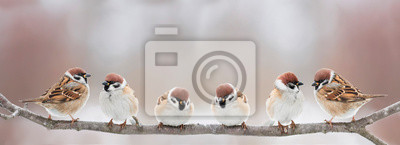 Fototapeta funny little birds sit on a branch in a spring Sunny Park and chirp