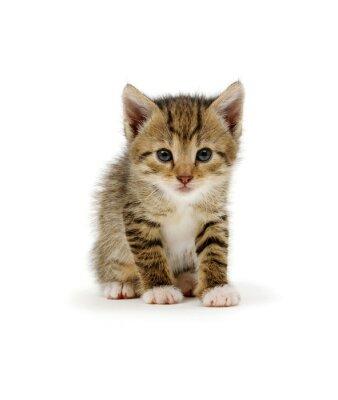 Funny striped kitten sitting on white