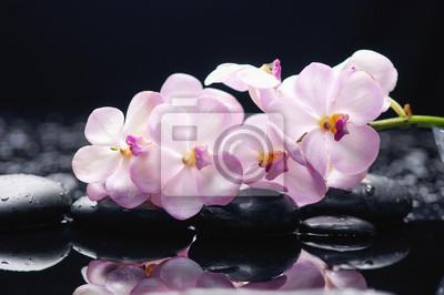 gałąź orchidea na czarnych kamieniach