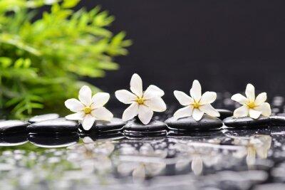 gardenia, zielony bambus z kamieniami do terapii