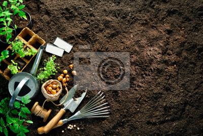 Fototapeta Gardening tools and seedlings on soil