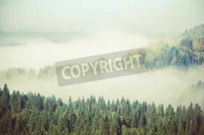 Fototapeta Gęsta mgła pokryta gęstym lasem iglastym. Las z lotu ptaka. Drzew iglastych, gęstych lasów zielonych. Mgła pokryta gęstym lasem iglastym.